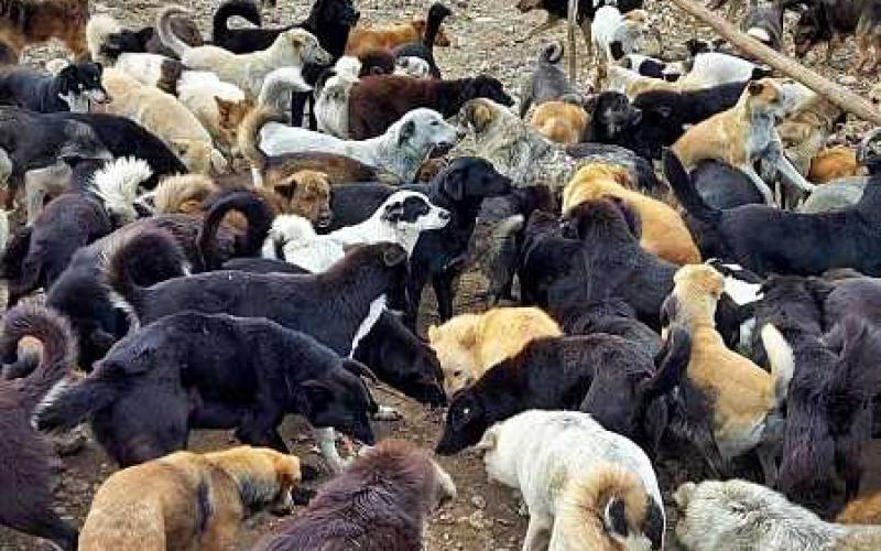 stichting-dierennood-hulpproject