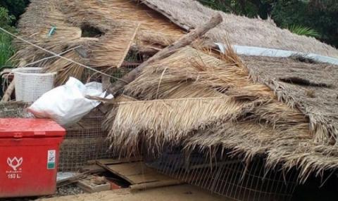 Dierennood steunt zwerfdierenopvang in Thailand.